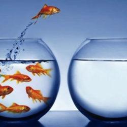 Mentalidad Dividend Growth
